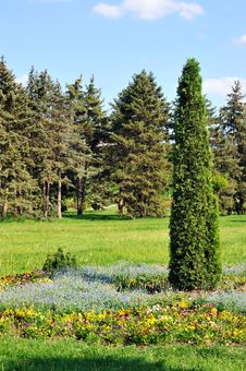 Free Landscaped Park-arborvitae In The Flowerbed. Stock Photo - 31860610