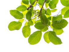 Free Green Leaf Frame Stock Image - 31872211
