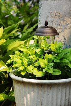 Free Basil In A Pot Stock Images - 31879334