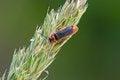 Free Beetle Stock Photography - 31880122