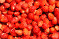 Free Wild Strawberry Royalty Free Stock Photography - 31893057
