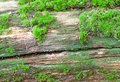 Free Wood Covered With Moss Stock Photos - 31893893