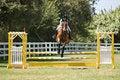 Free Horse Jumping Stock Photos - 3190773