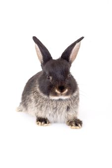 Free Black And White Bunny, Isolate Stock Images - 3190554