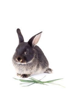 Free Black And White Bunny, Isolate Stock Image - 3190571