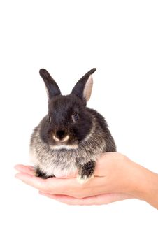 Free Black And White Bunny, Isolate Stock Photos - 3190583