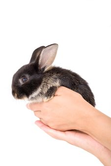 Free Black And White Bunny, Isolate Royalty Free Stock Photos - 3190588