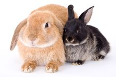 Free Brown And Black Bunny Stock Images - 3190694