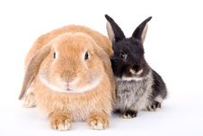 Free Brown And Black Bunny Stock Images - 3190724