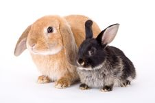 Free Brown And Black Bunny Stock Photo - 3190750