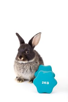 Free Black Bunny And A Weight Royalty Free Stock Photos - 3190978