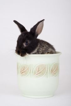 Free Bunny In A Flower Pot Royalty Free Stock Photos - 3190988