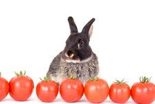 Free Black Bunny And Some Tomato Stock Images - 3191004