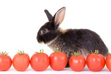 Free Black Bunny And Some Tomato Stock Photos - 3191013