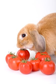 Free Brown Bunny And Some Tomato Royalty Free Stock Photo - 3191035