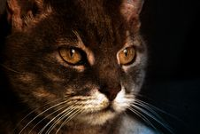 Cat In The Morning Royalty Free Stock Image