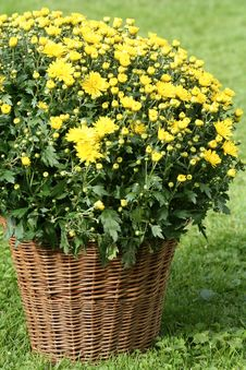 Free Flowers In The Basket Royalty Free Stock Image - 3191156
