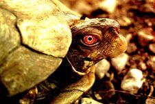 Free Strange Turtle Royalty Free Stock Photography - 3191227