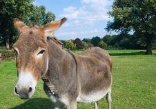 Free Donkey Stock Photography - 3191312