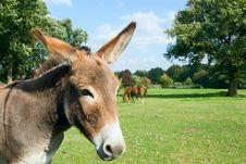 Free Donkey Royalty Free Stock Image - 3191316