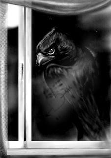 Bird-night Stock Photo