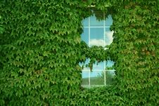 Ivy Covered Building Stock Image
