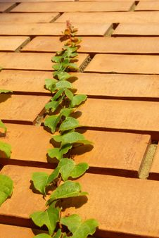 Free Bricks Stock Photos - 3192083