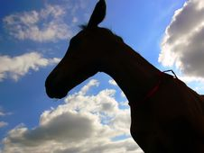 Free Horse - Colt Royalty Free Stock Photography - 3194037