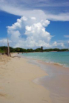 Free Tropical Beach Royalty Free Stock Photo - 3194115
