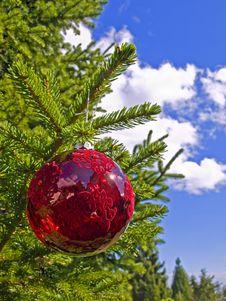Free Sunny Christmas Royalty Free Stock Photos - 3194318