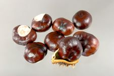 Chestnuts. A  Close Up Shot Stock Images