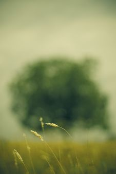 Free Tree In The Field Royalty Free Stock Images - 3196069