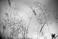 Free Field Grass/vegetation Detail Stock Images - 3196084