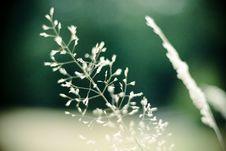 Free Field Grass/vegetation Detail Stock Photo - 3196090