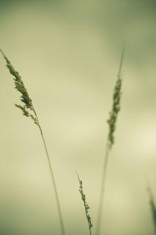 Free Field Vegetation Details Stock Image - 3196091