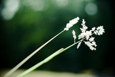 Free Field Vegetation Details 3 Royalty Free Stock Images - 3196129
