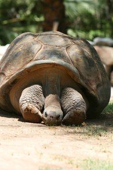 Free Turtle Time Stock Photos - 3196993