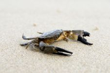 Free Portrait Of A Crab Stock Image - 3197601