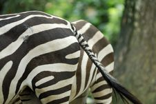 Free Zebra S End Stock Photography - 3199152