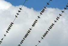 Free Birds On A Wire Stock Images - 3199154