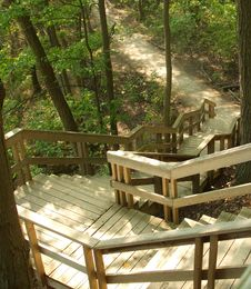 Free Forest Stairway Royalty Free Stock Photography - 3199197