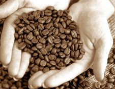 Free Grains Stock Photo - 3199350