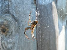 Free Spider. Royalty Free Stock Photography - 3199827