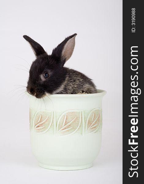 Bunny in a flower pot
