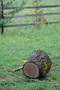 Free Tree Log Royalty Free Stock Photography - 31913027