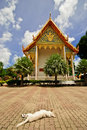 Free Wat Chalong And The Sleeping Dog Royalty Free Stock Images - 31915379