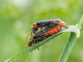 Free Beetles Stock Photos - 31915453