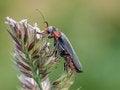 Free Beetle Stock Photos - 31916133