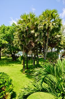 Free Tropical Thai Gardens Royalty Free Stock Photo - 31917055