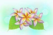 Free Fragrant Flowers Stock Photo - 31918960